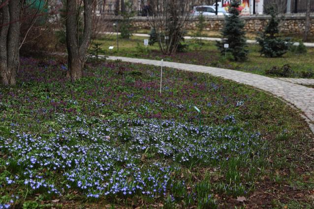 Фото Ботанический сад Кирова заработает с 1 мая
