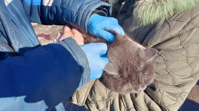 Фото В Нововятском районе Кирова домашних животных бесплатно привьют от бешенства